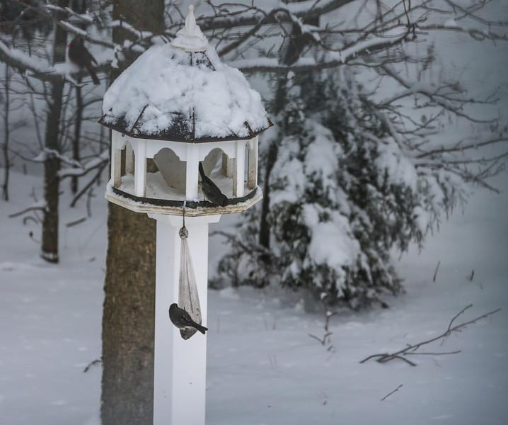 Fun in the snow 022615-2.jpg