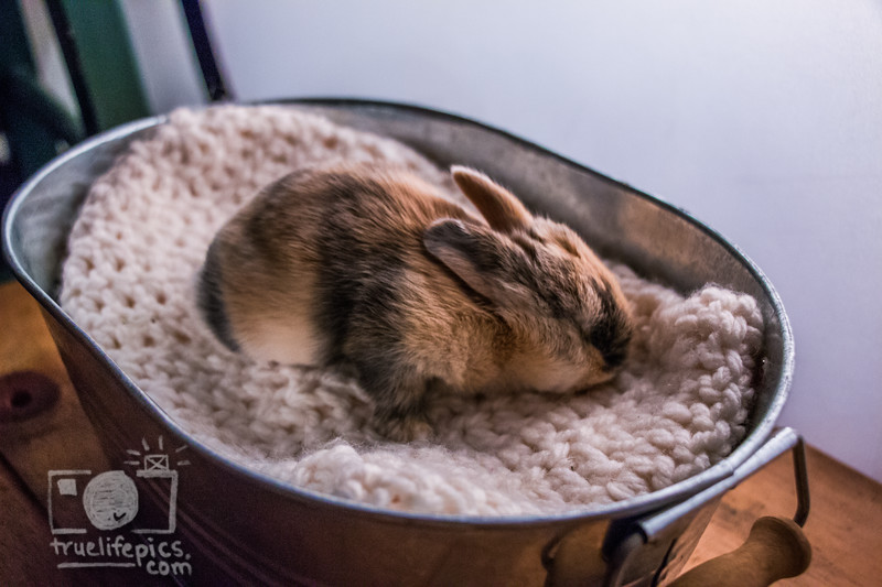 20160815 11 day old bunnies (27).jpg