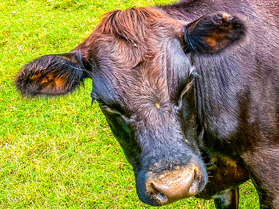 On The Farm with The Black Angus - 9-15-21