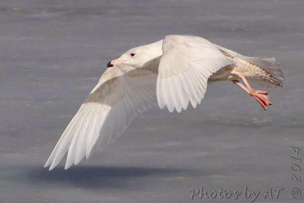 2014-01-26 Riverlands Migratory Bird Sanctuary