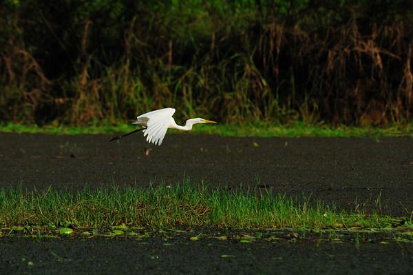 Indian Birds-Herons, Egrets, Storks