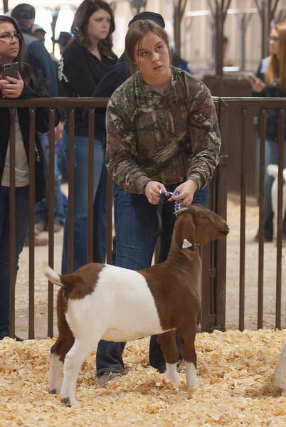 kay_county_showdown_goats_20191207-133.jpg