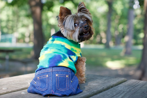 Lynn's Dog Baxter