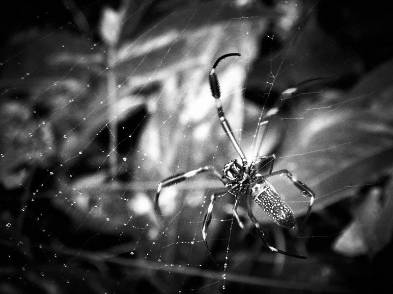 B&W La Brea15.jpg