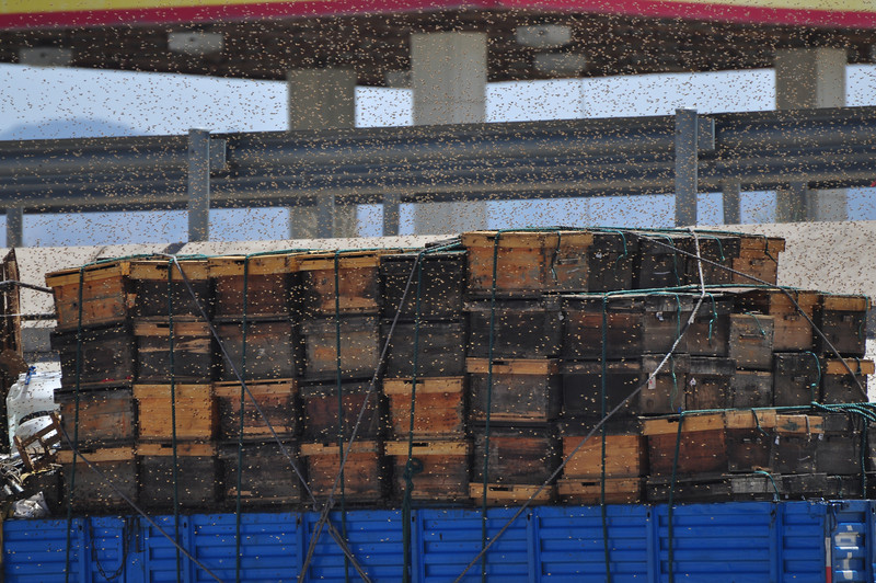 Here's a close-up of the bees and their hives.