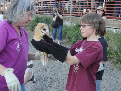 4- Barn Owlets-Released-Rehabbed- Rescued- together from Truck- Released at public event w/ Media