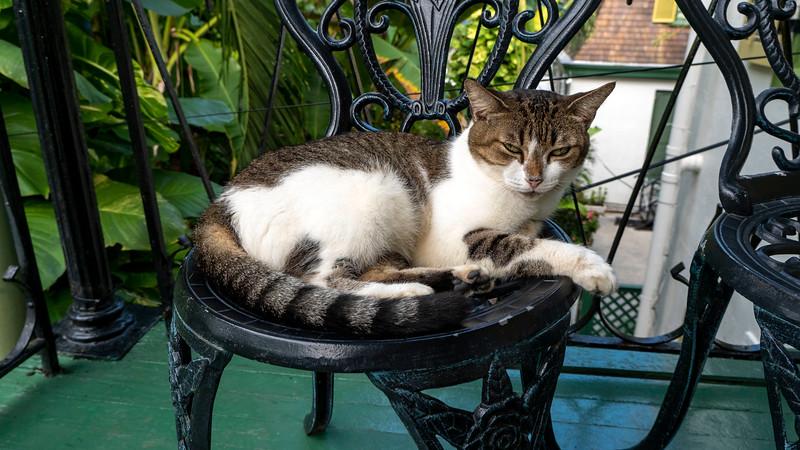 Florida-Keys-Key-West-Hemingway-Home-Cats-04.jpg