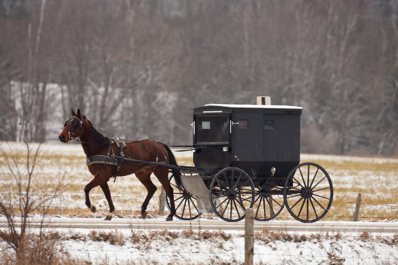 Amish Buggy Winter in Mio, Michigan