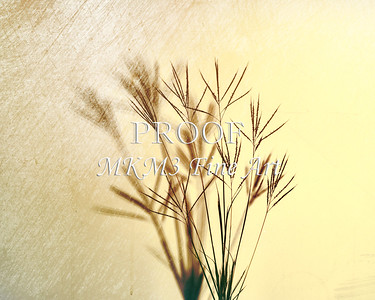 Johnson Grass Art Photographs in Color