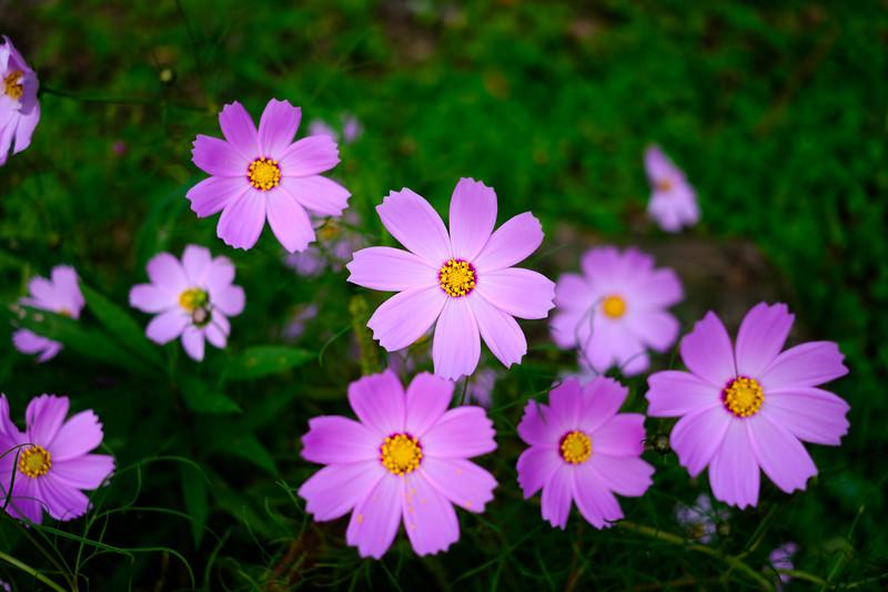 Fujinon 27mm f2.8 Flowers