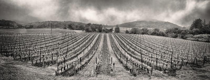 Kenzo Estate. Vineyards.
