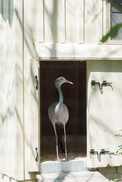Syracuse Zoo August 2020-27.jpg