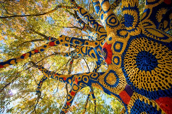 WV Blue & Gold Tree-M