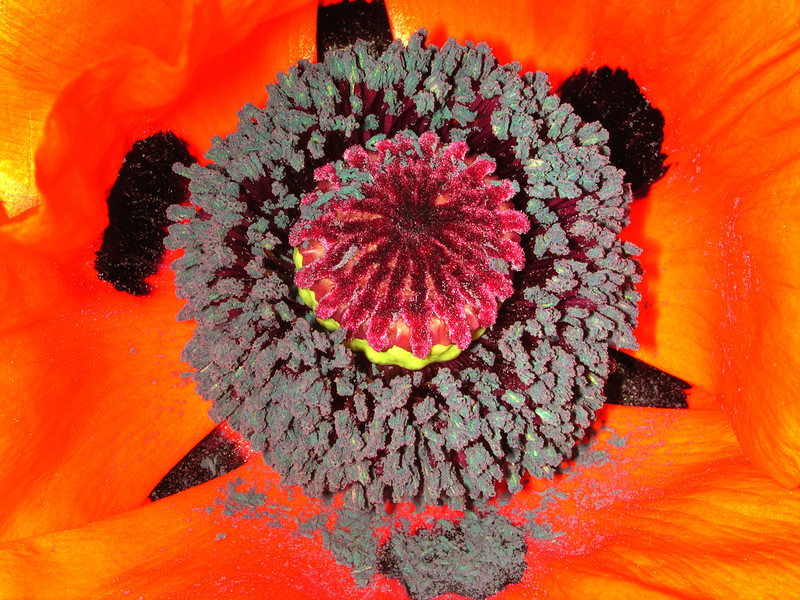 poppy 78  www.tabblo.com/studio/stories/view/248658/