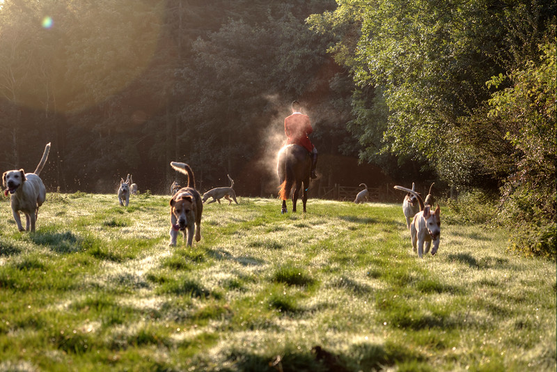 Running with the hounds