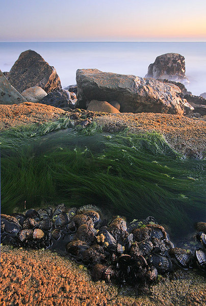Wonder Tide Pool