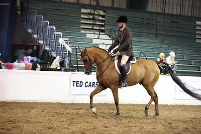 98.Arabian Hunter Pls Jr. Horse Championship