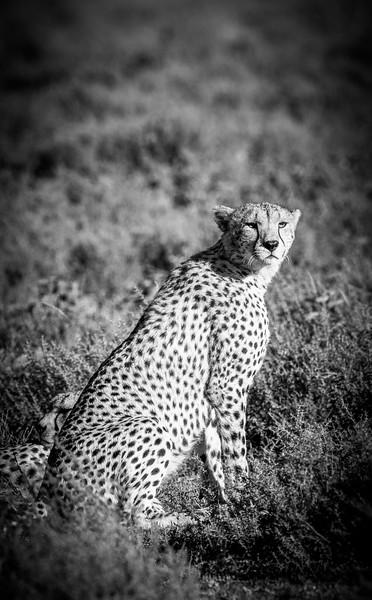 Tanzania_Feb_2018-235.jpg