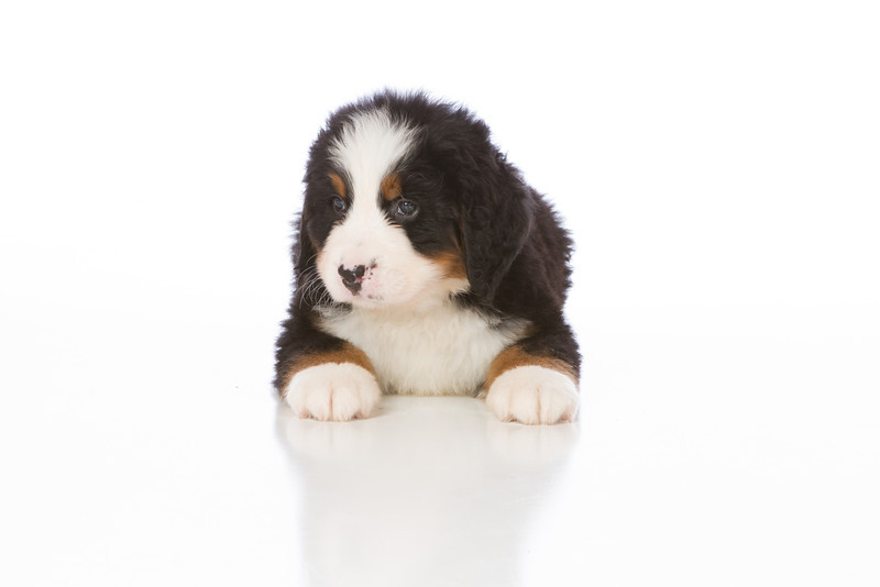 2013-Pearson Pups-Jun02-0284.jpg
