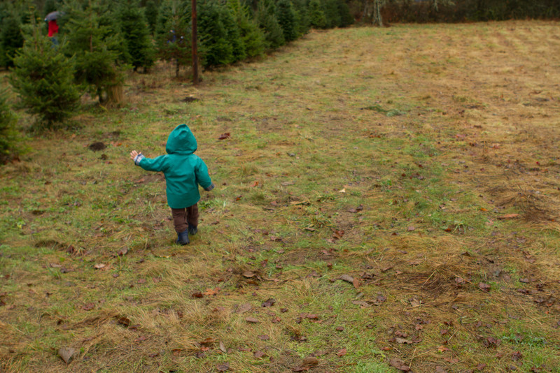 2012_ChristamsTree_Hunt-63.jpg