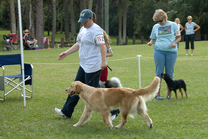This Golden Retriever shows its side gait during the Best In Match competition.