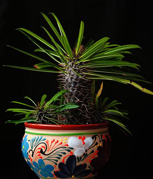 succulent fujichrome 100  051420-.jpg