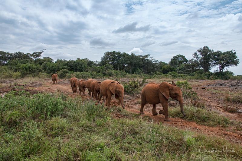 Aug312013_nairobi_blixen_elephant_2050.jpg