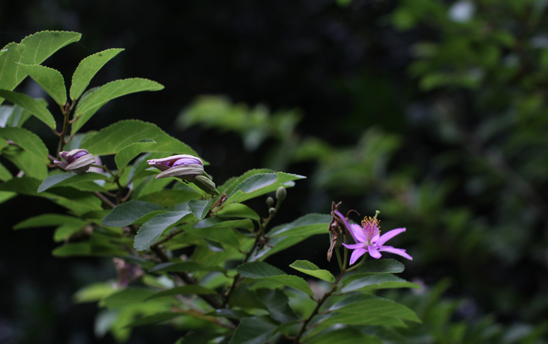 garden (52).jpg