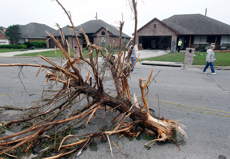 . Part of a pine tree sits in the middle of the road on Thursday, May 16, 2013 in Cleburne, Texas.  A rash of tornadoes slammed into several small communities in North Texas overnight, leaving at least six people dead, dozens more injured and hundreds homeless. The violent spring storm scattered bodies, flattened homes and threw trailers onto cars.  (AP Photo/The Dallas Morning News, Michael Ainsworth)