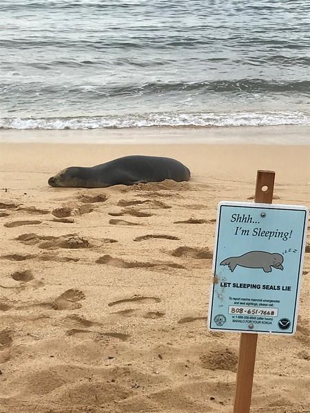 Monk seal sleeping on Poipu Beach