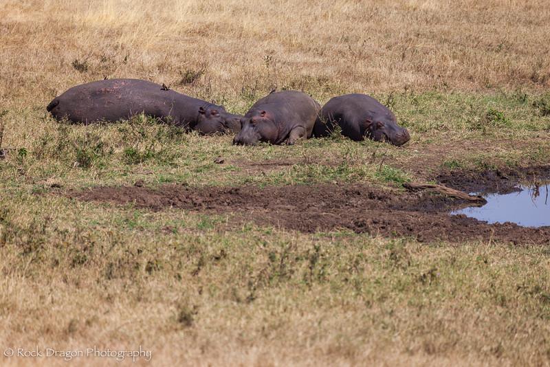 Ngorongoro-38.jpg