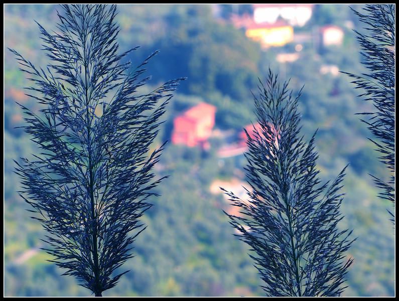 2014-11 Montecatini Alto 288.jpg