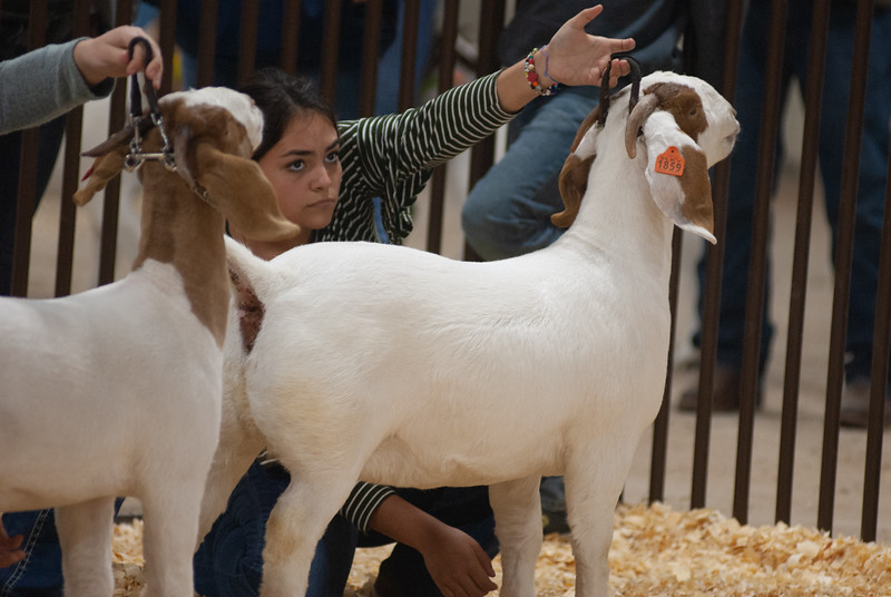 kay_county_showdown_goats_20191207-127.jpg