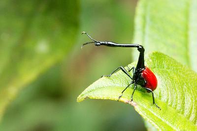Malagasy Invertebrates