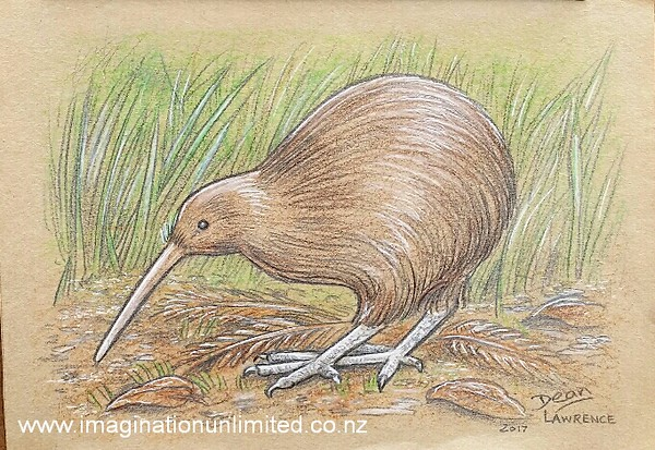 Kiwi drawing by Dean Lawrence.jpg