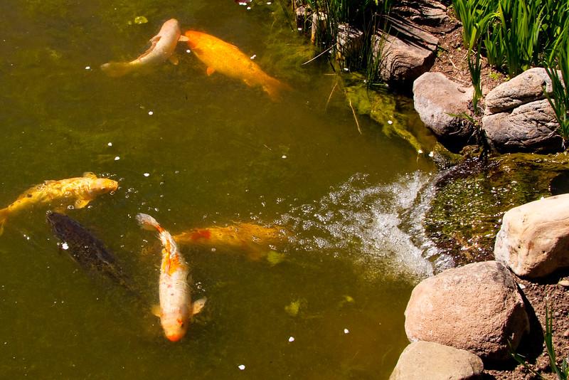 Hakone_Gardens-16.jpg