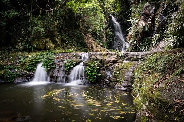 2016 - O'Reilly's Rainforest Waterfalls and Walks