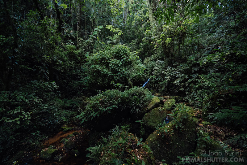 Mantiqueira southeastern atlantic forest