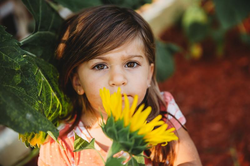 Sunflower (3 of 1).jpg