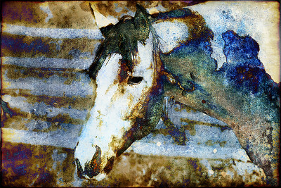 """Horse in Blue"" (digital) by Catherine DiMare-D'Souza"