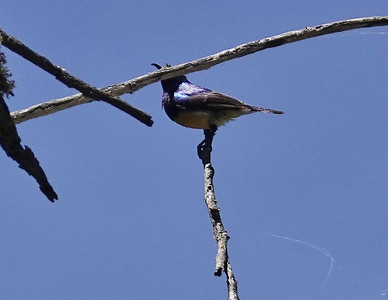 Birds of Lake Naivasha