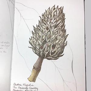 2018 Sketchbook IG Pictures