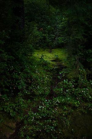 Redwoods and the Oregon Coast