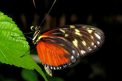 The Magic Of Butterflies