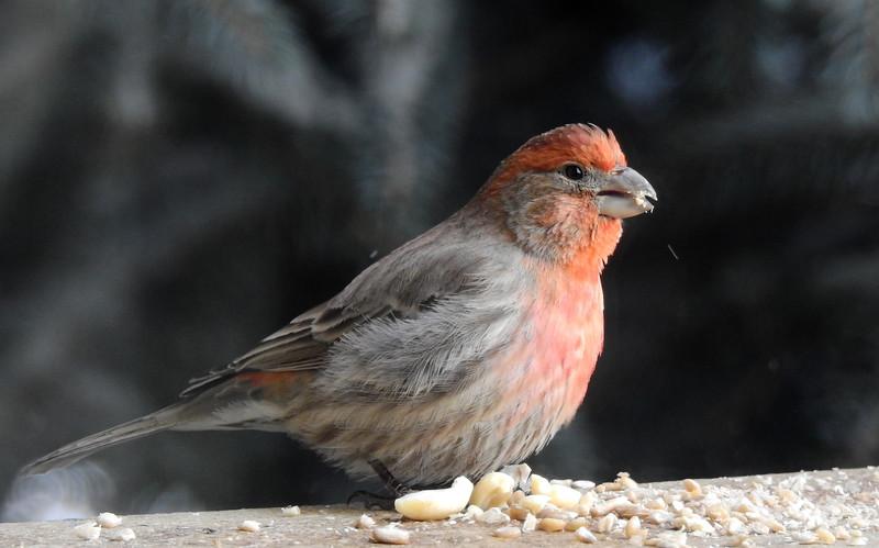 birds (224).JPG