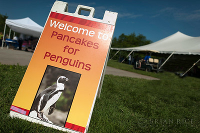 Pancakes for Penguins, May 13th, 2012