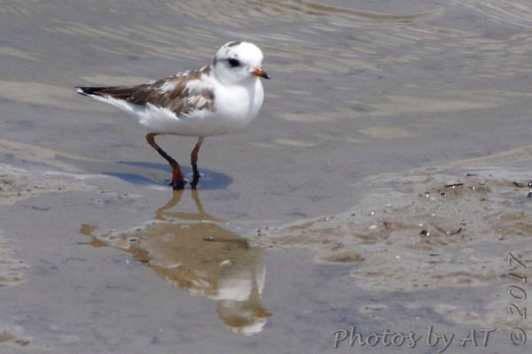 2017-07-31 Riverlands Migratory Bird Sanctuary