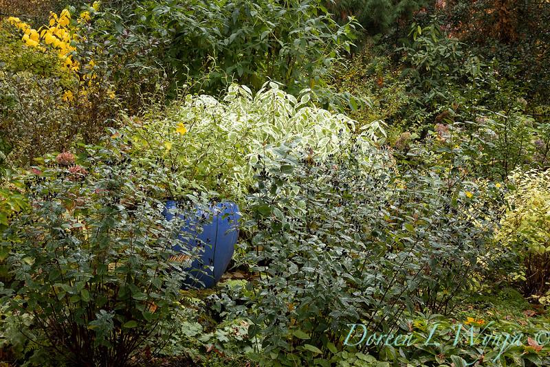 Dietrick fall garden_2065.jpg