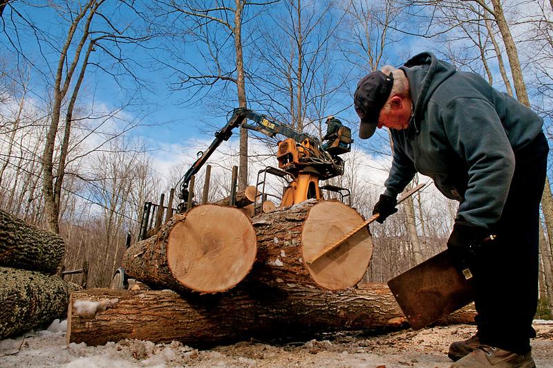 Timber Broker