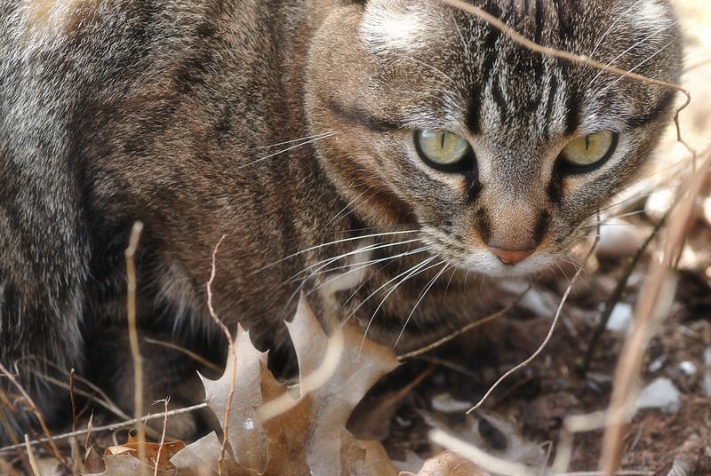 Cat#1.jpg